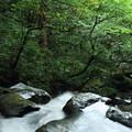 Photos: 七つ滝と緑  能美市辰口