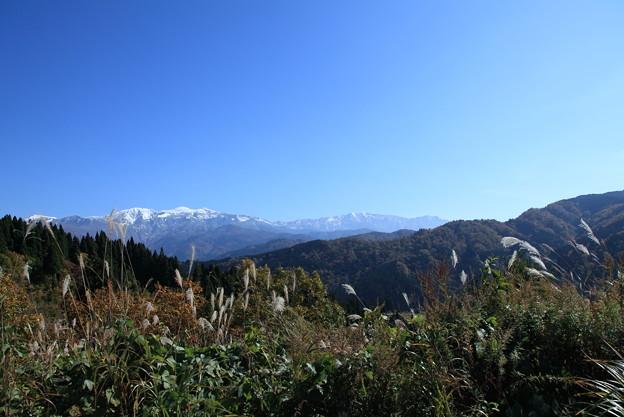 冠雪の白山とススキ