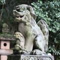 初詣  親子の狛犬