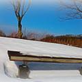 Photos: 公園のベンチ?