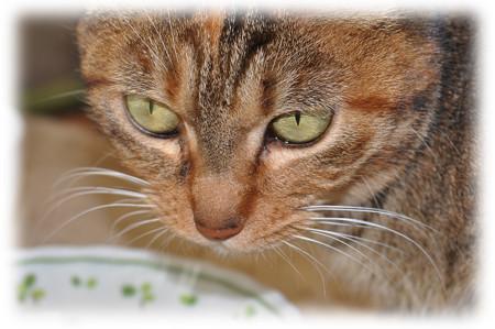 外猫 pi_20140218_2 bokashi