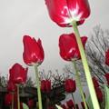 写真: 赤赤赤。