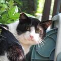 Photos: 見返り猫