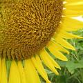 Photos: 太陽ギラギラ