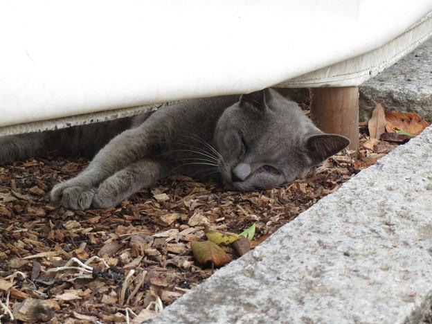 写真: 猫も夏バテ?