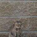 Photos: メンチ切る猫(2)