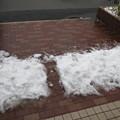 Photos: 初めての雪かき。