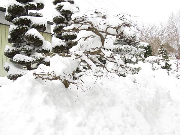 78年ぶりの大雪1