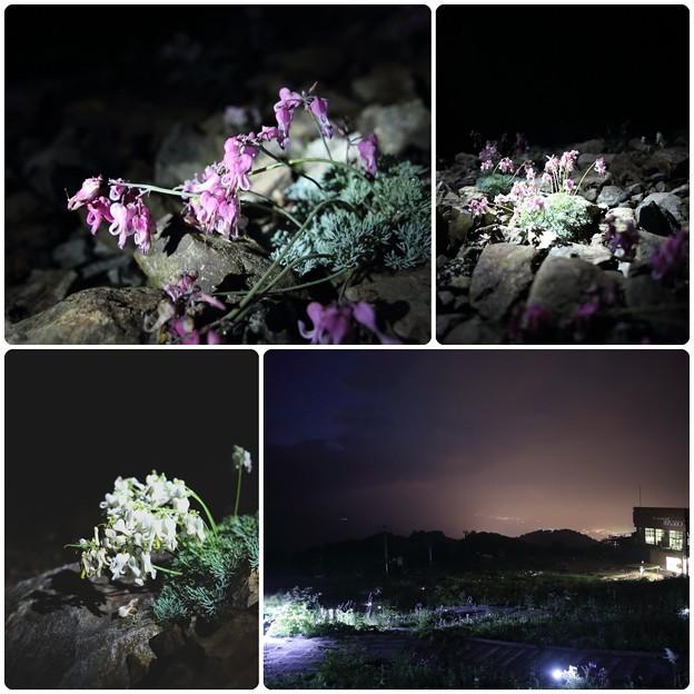 五竜 夜のお楽しみ`13-3