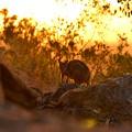 写真: Aus 2012-11-27 18-19-50 4608x3072