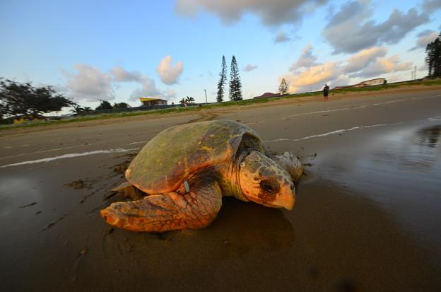 写真: Aus 2012-12-08 5-28-03 4928x3264