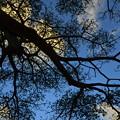 写真: Aus 2012-11-28 18-05-21 4928x3264