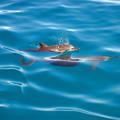 イルカ親子1
