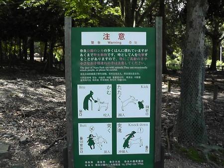 奈良公園17