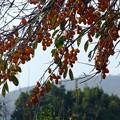 Photos: 秋の実り
