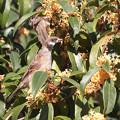 Photos: 金木犀の花弁は旨いのかい・・?
