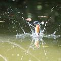 Photos: 古池や 〇〇飛び込む 水の音