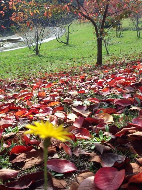 写真: 往く秋を見つめて