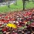 往く秋を見つめて