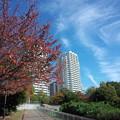 写真: 秋を送りつつ