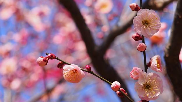 写真: 春来る