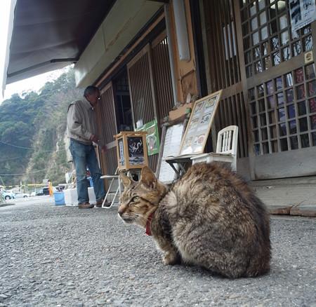 江の島猫1