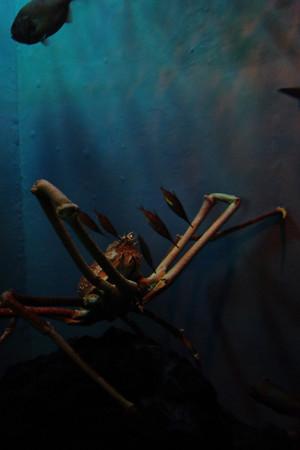 深海に潜む