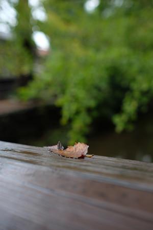 落葉f2.2
