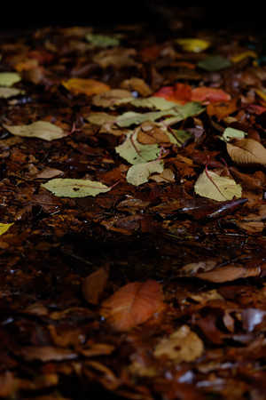 05_濡れ落ち葉