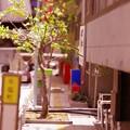 人の気配がない破壊された町 特撮模型・・20120729