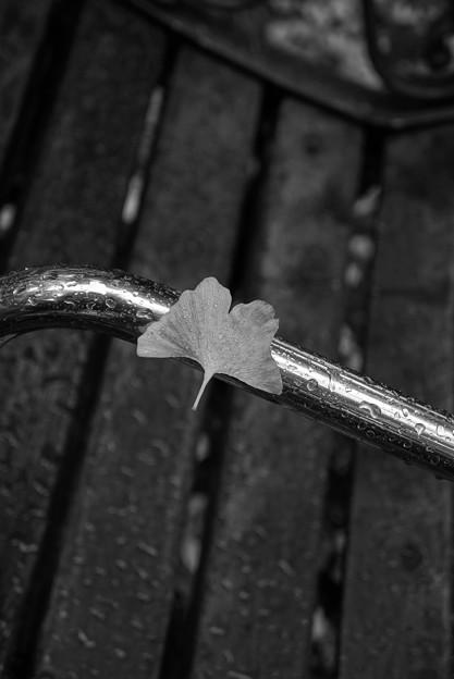 雨に濡れても。。。踏ん張るイチョウの葉