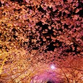 夜桜の河津桜並木のトンネル?・・20130302
