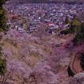 吉野梅郷の頂上から見た町・・20130316
