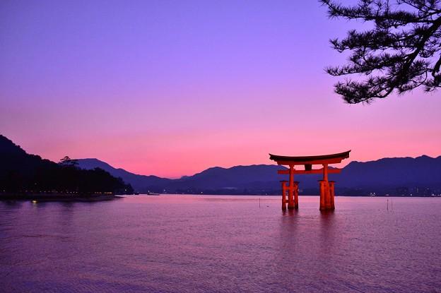 厳島の画像 p1_39
