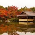 昭和記念公園の日本庭園 紅葉?・・20131109