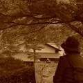 写真: 紅葉風景画を描く・・おばあちゃん 昭和記念公園20131109