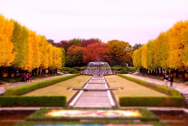 綺麗なカナール噴水広場・・昭和記念公園20131109