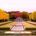 写真: 綺麗なカナール噴水広場・・昭和記念公園20131109
