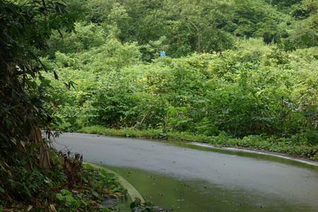 楢峠2012年-07