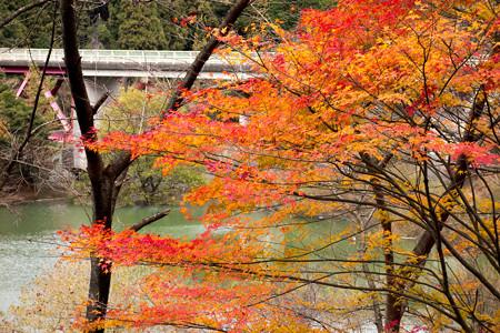 安濃ダム・錫杖湖の紅葉-1