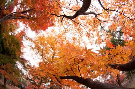 亀山公園の紅葉2012-2