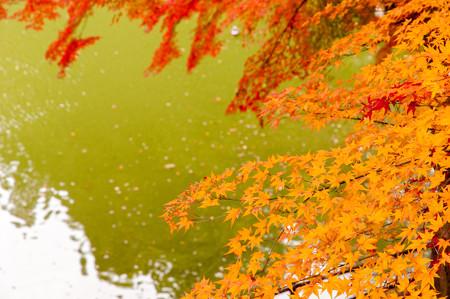 亀山公園の紅葉2012-4