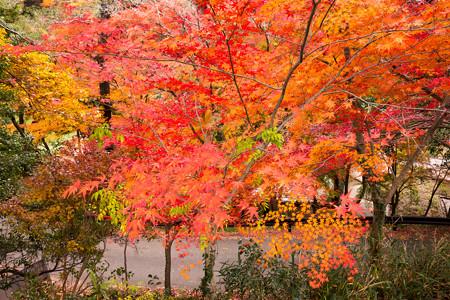 亀山公園の紅葉2012-5