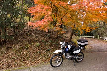鈴鹿峠旧道の紅葉・1