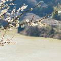Photos: 2013月ヶ瀬梅ツーリング・4