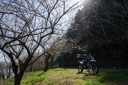 2013月ヶ瀬梅ツーリング・8