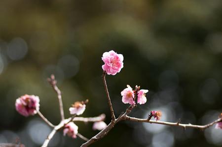 2013年春の河村瑞賢公園・4
