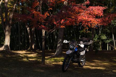 2013年・亀山公園の紅葉-1