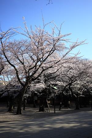 20130326-073950 靖国神社