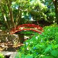 写真: 紅い橋